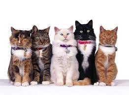V. Woolf e i gatti di T. Hardy
